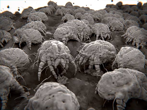 Dust mites, allergens stock photo