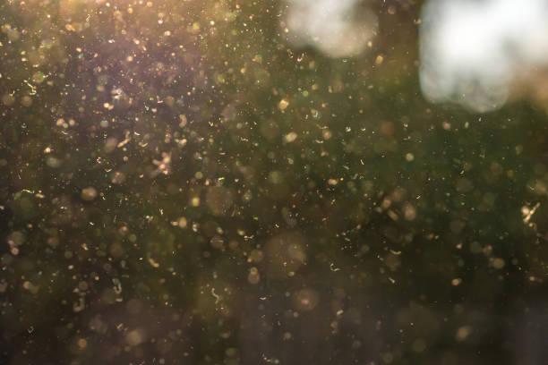dust, pollen and small particles fly through the air in the sunshine. - pyłek zdjęcia i obrazy z banku zdjęć