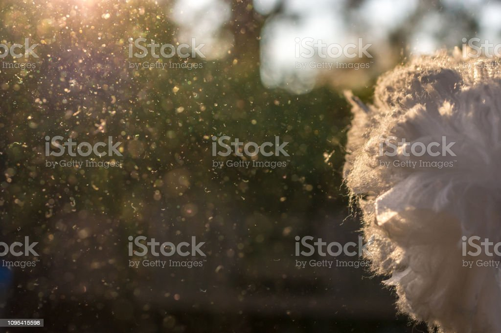 Dusts are shaken in the sunlight after house cleaning stock photo