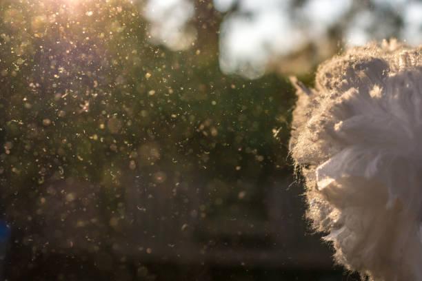 Stäube sind im Sonnenlicht nach Hausreinigung erschüttert. – Foto