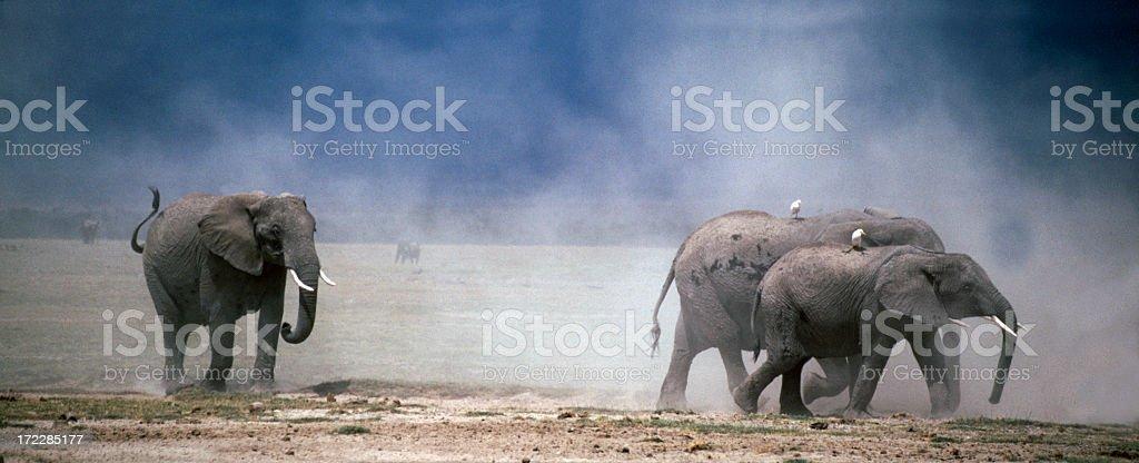 Dusty Elephants in Amboseli stock photo