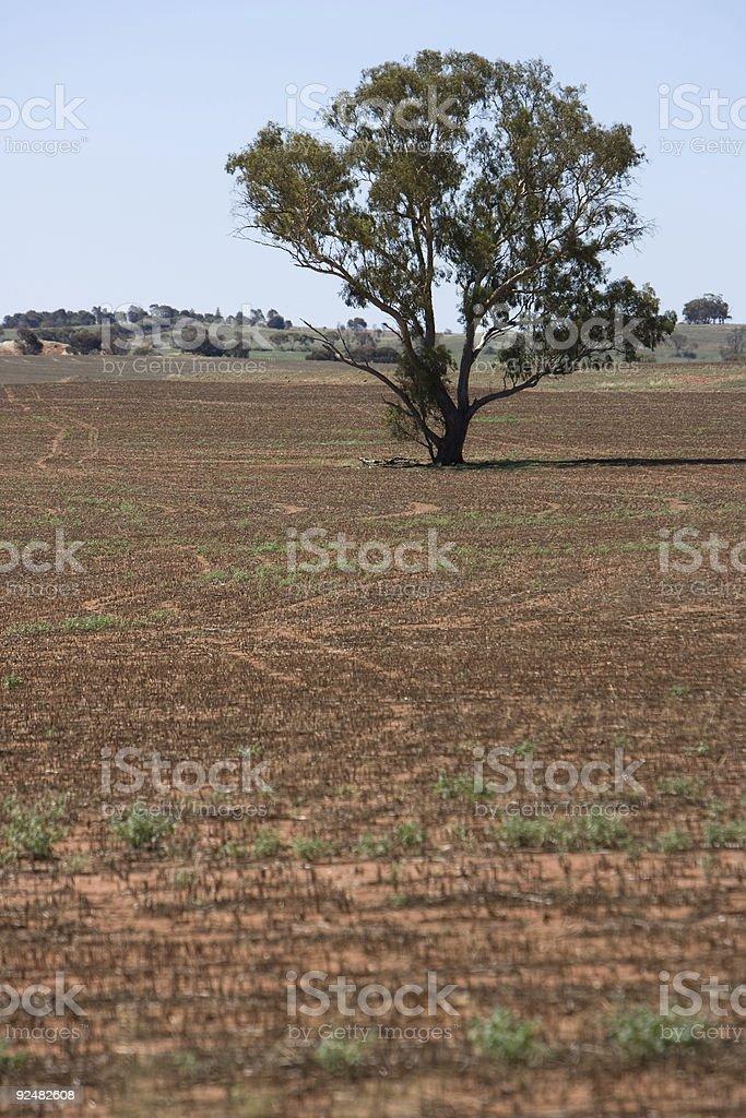 Dusty field in Victoria, Australia. royalty-free stock photo