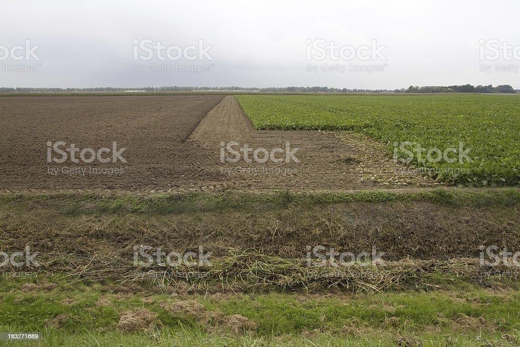Dutch acres royalty-free stock photo