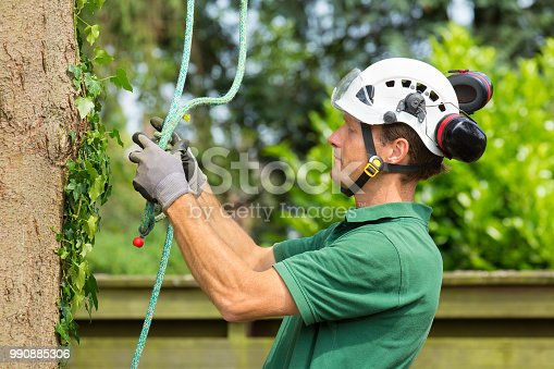istock Dutch arborist checking climbing rope at tree 990885306