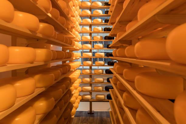 Dutch cheese – zdjęcie