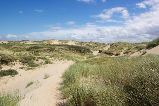 Dutch dunes on a sunny day stock photo