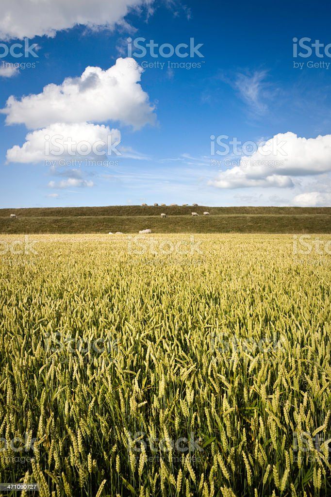 Dutch Fields royalty-free stock photo