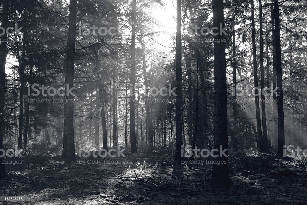 Dutch Forest royalty-free stock photo