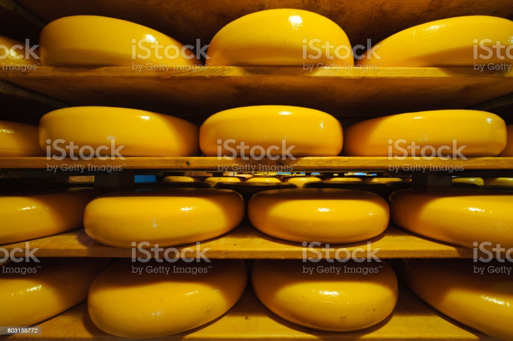dutch Gouda cheese ripening stock photo