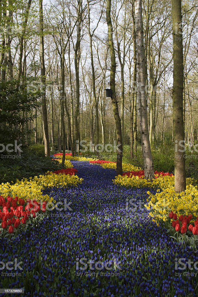Dutch Keukenhof royalty-free stock photo