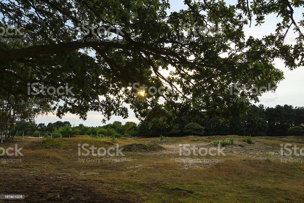 Dutch landscape in the evening, sunset royalty-free stock photo