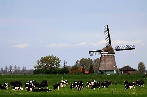 dutch landscape - beemster stockfoto's en -beelden
