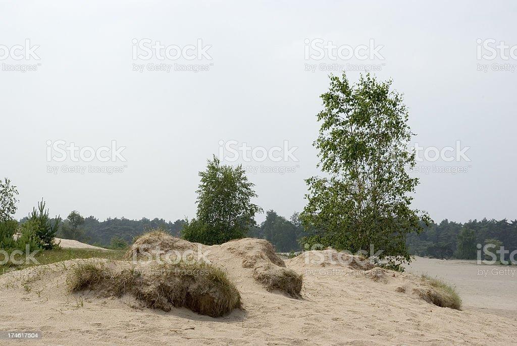 Dutch Landscape: Sand Dunes (Soester Duinen) foto