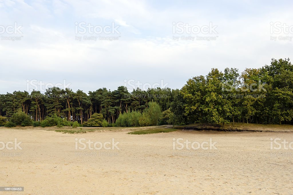 Dutch landscape with pines in the evening royalty-free stock photo