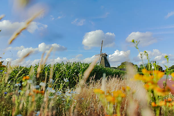 dutch landscape with windmill - eindhoven city stockfoto's en -beelden
