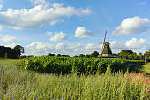 Dutch summer landscape with windmill