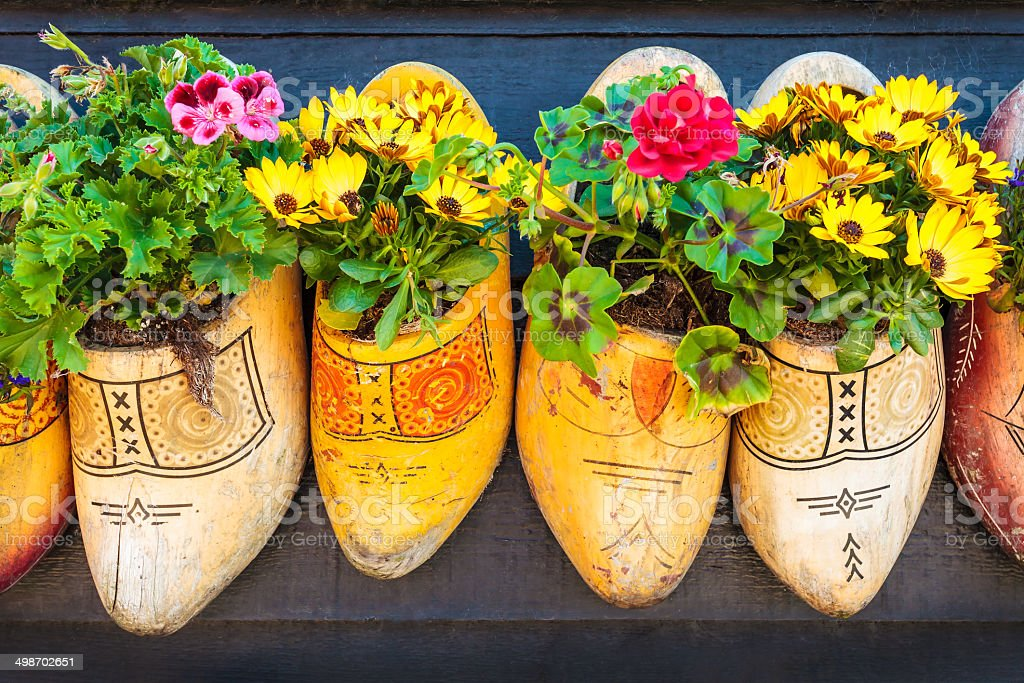 Dutch old wooden clogs with blooming flowers stock photo