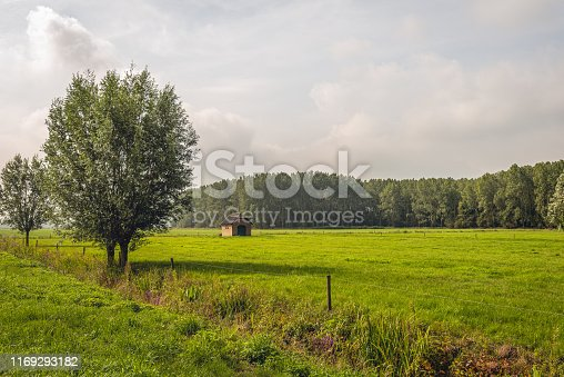 istock Dutch polder landscape with grassland and trees 1169293182