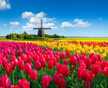 Dutch Spring Scene Stock Photo - Download Image Now