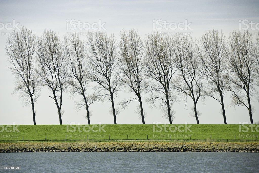 Dutch Treelined Dike royalty-free stock photo