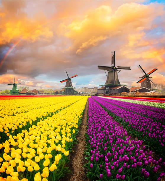 Dutch wind mills stock photo