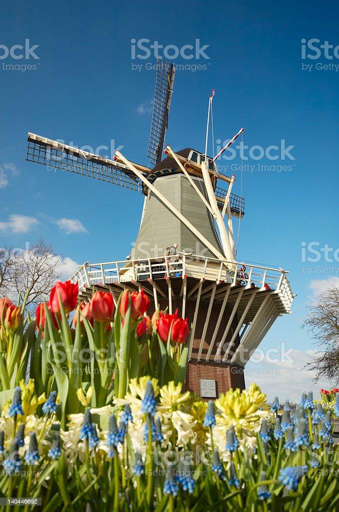 Dutch windmill and tulips stock photo
