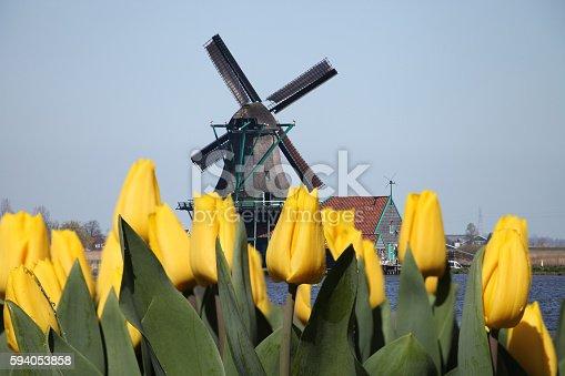 Dutch windmill tulip flower field, Netherlands