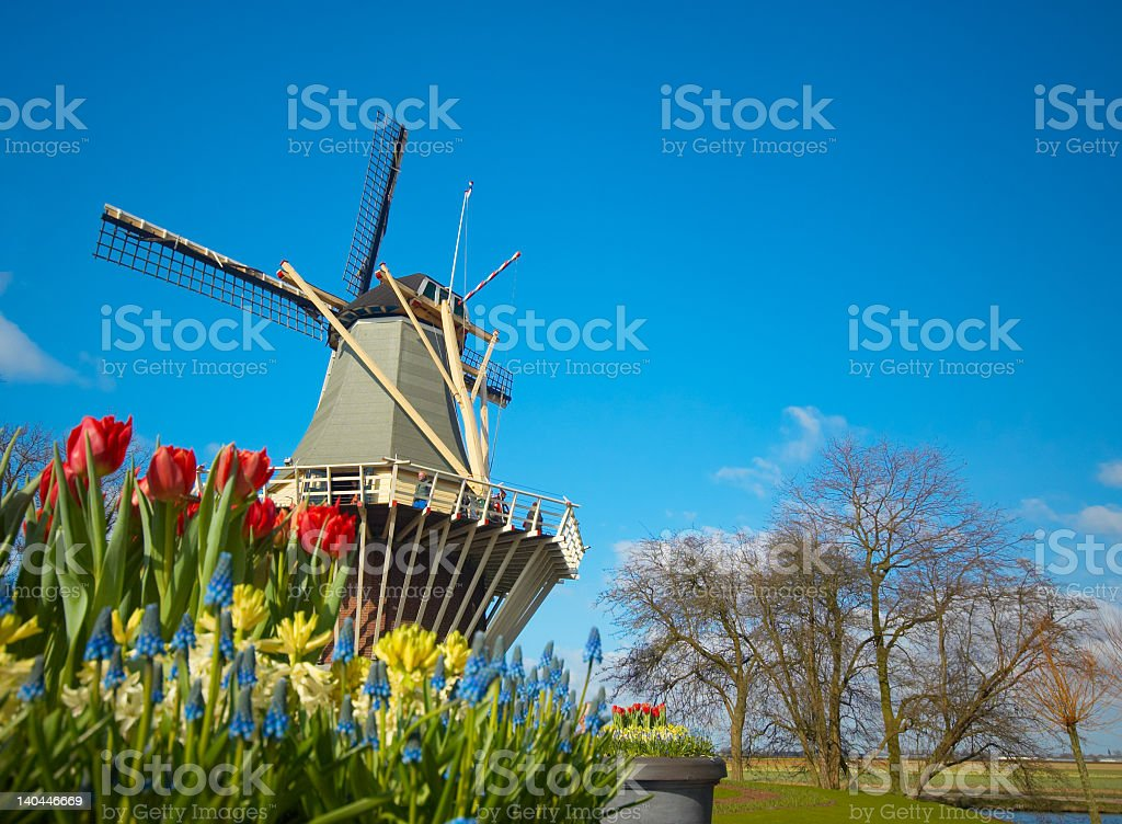 Dutch windmill with red and yellow tulips stock photo