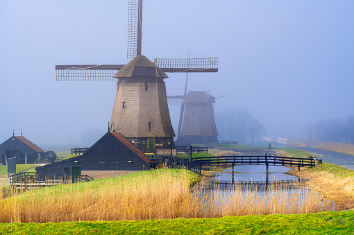Dutch windmills along a canal with reed and a meadow alongside. The location is Schermerhorn, Netherlands