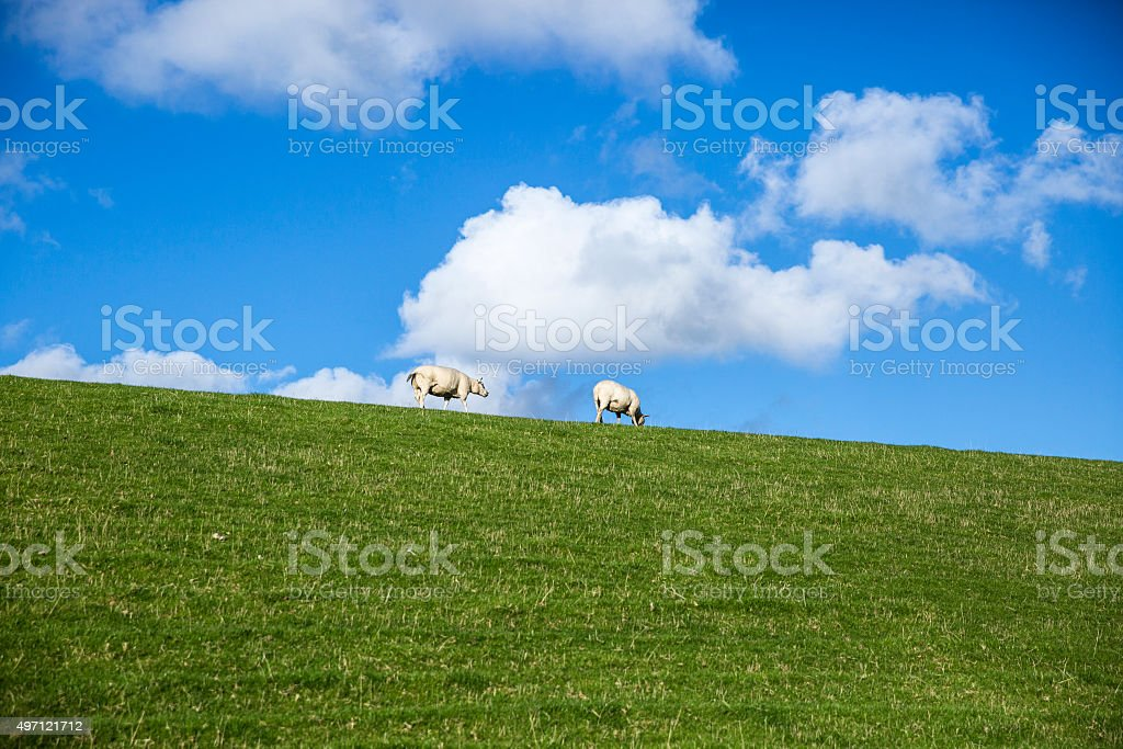 Dutchlandscape with dyke, green grass, sheeps, blue sky, white clouds stock photo