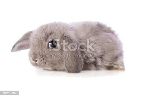 A cute baby rabbit on white.