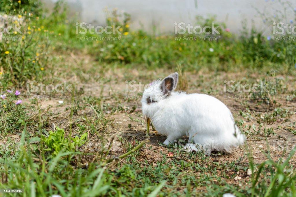 Zwerg Kaninchen Im Garten Stockfoto Und Mehr Bilder Von Agrarbetrieb