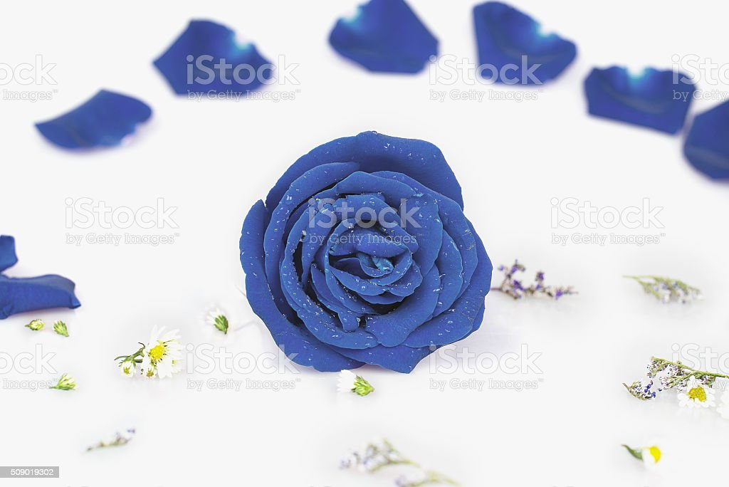 Dye blue rose with Rose petals, pastel color stock photo