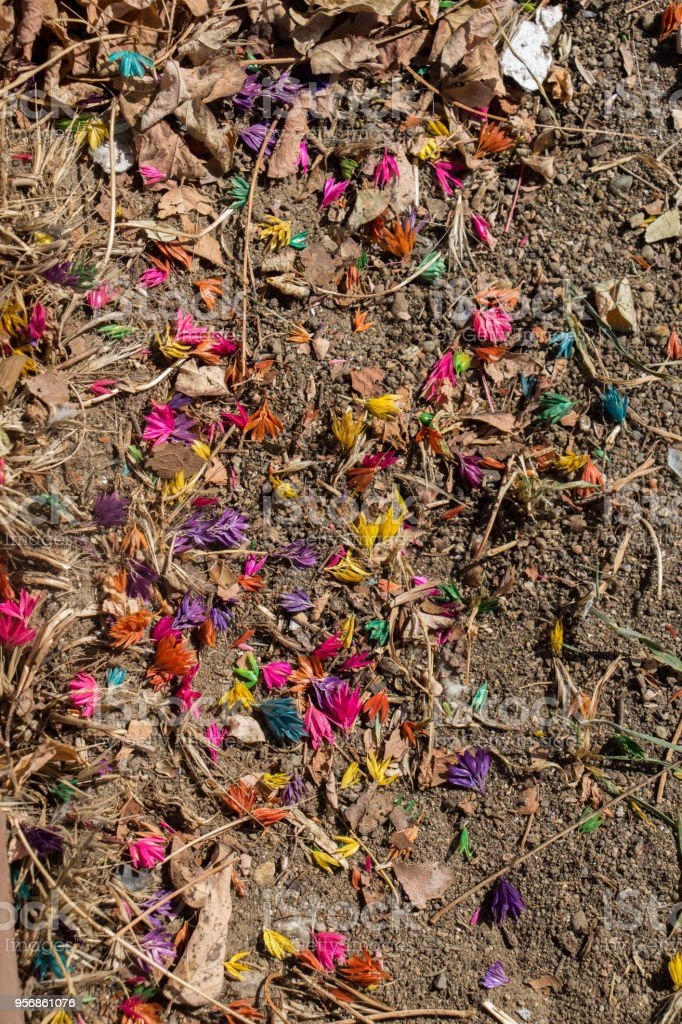 Dyed colorful flowers on the soil ground stock photo