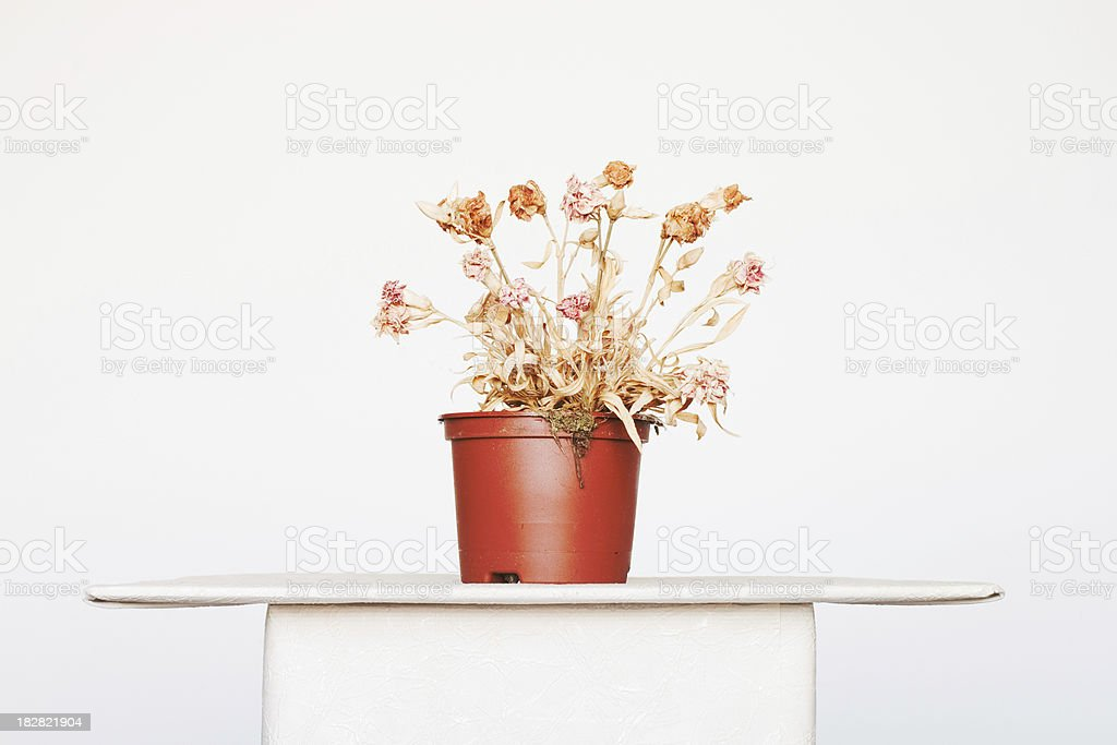 Dying dry flower plant stock photo