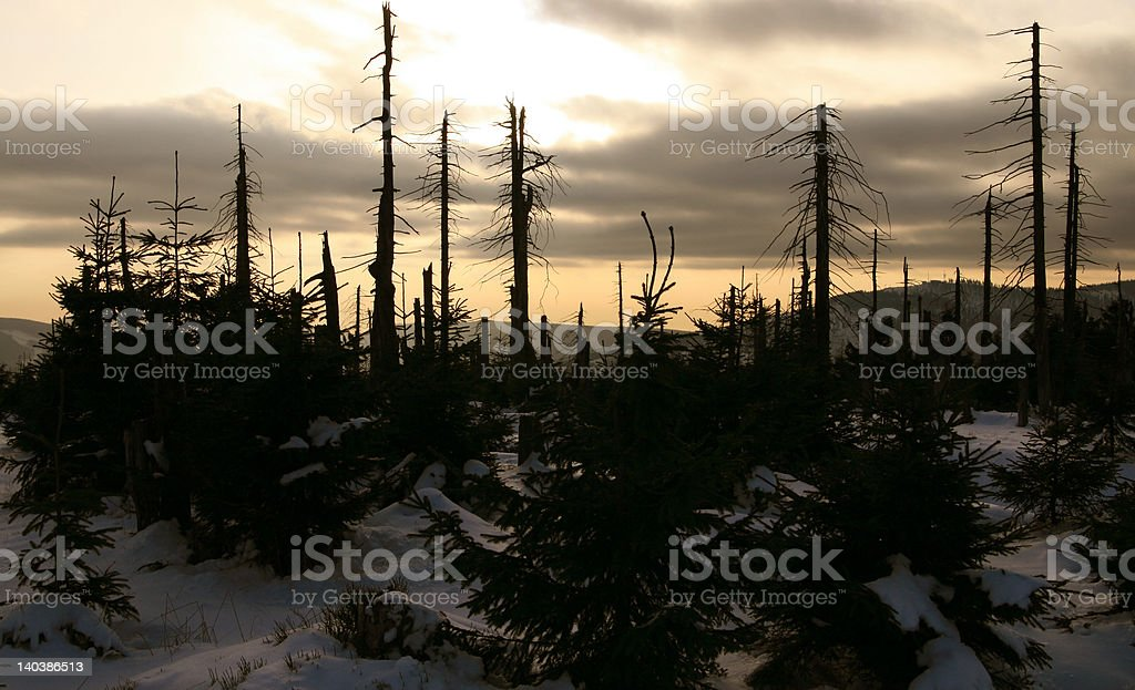 dying forest royalty-free stock photo
