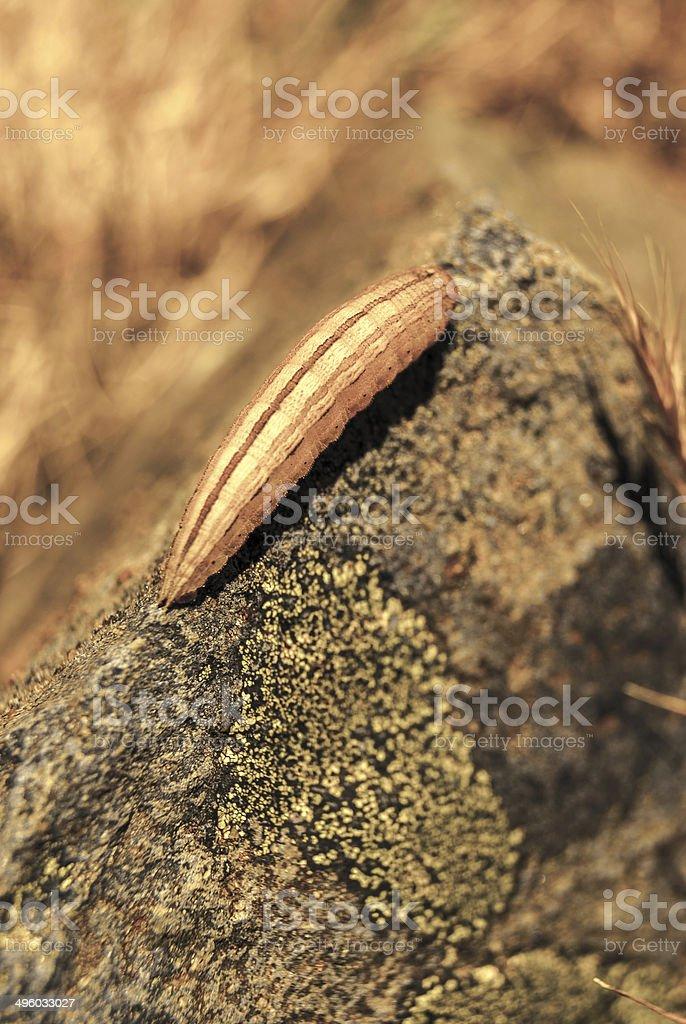 Dying Larva hot day royalty-free stock photo