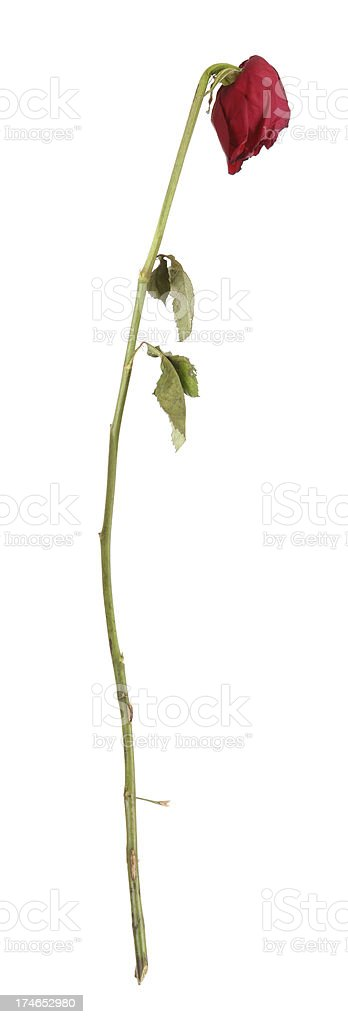 Dying Love stock photo