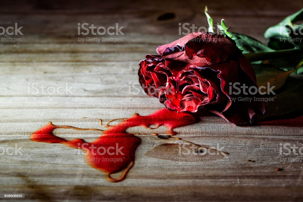 Dying Rose stock photo