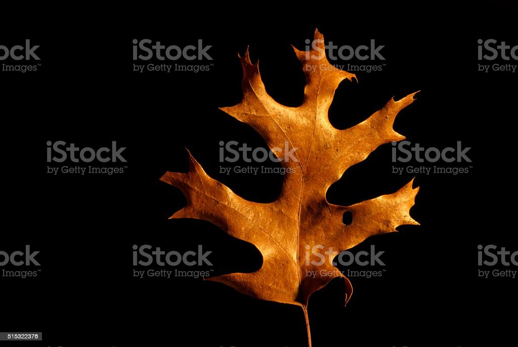 Each leaf, each oak, in so many forests, is beautiful stock photo