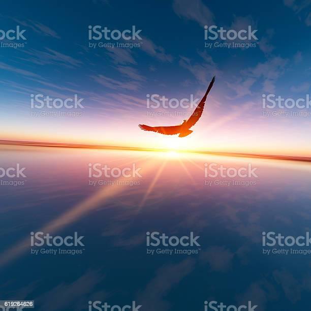 Eagle against horizon sun picture id619264626?b=1&k=6&m=619264626&s=612x612&h=zortjjvhjc6nhyzkabm0c khgtvtqkd7k0ixt jog2s=