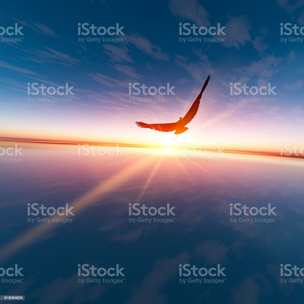 Eagle against horizon sun - foto stock