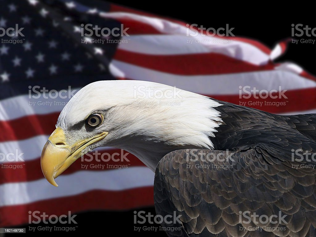 Eagle and Flag royalty-free stock photo