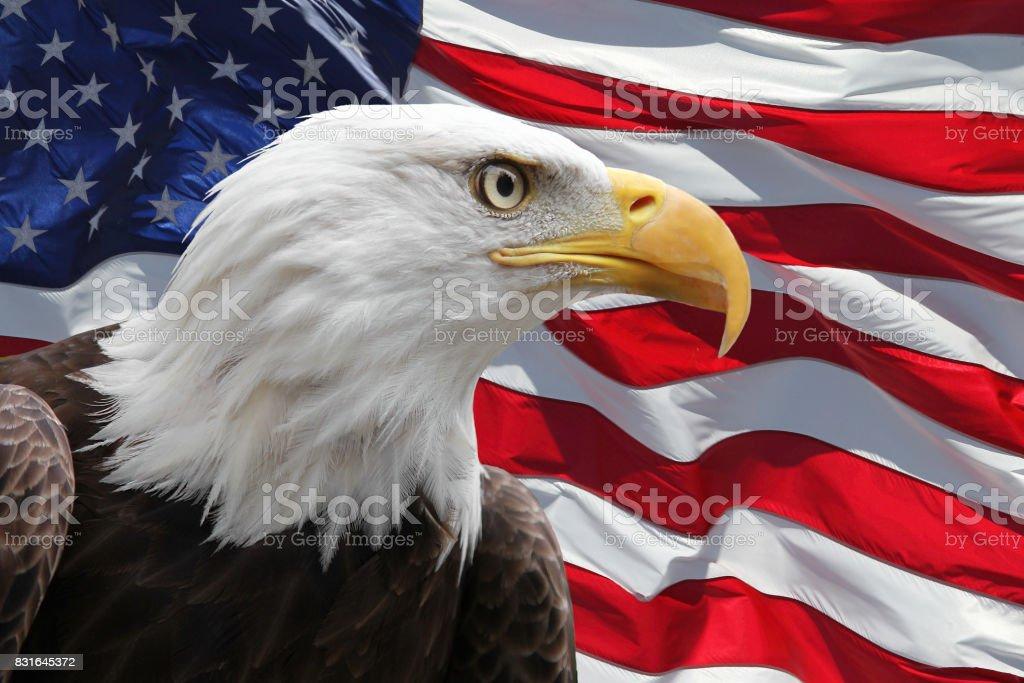 Eagle and US Flag stock photo