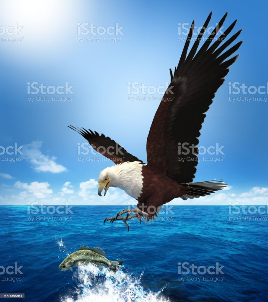 Eagle Attacking a Fish stock photo