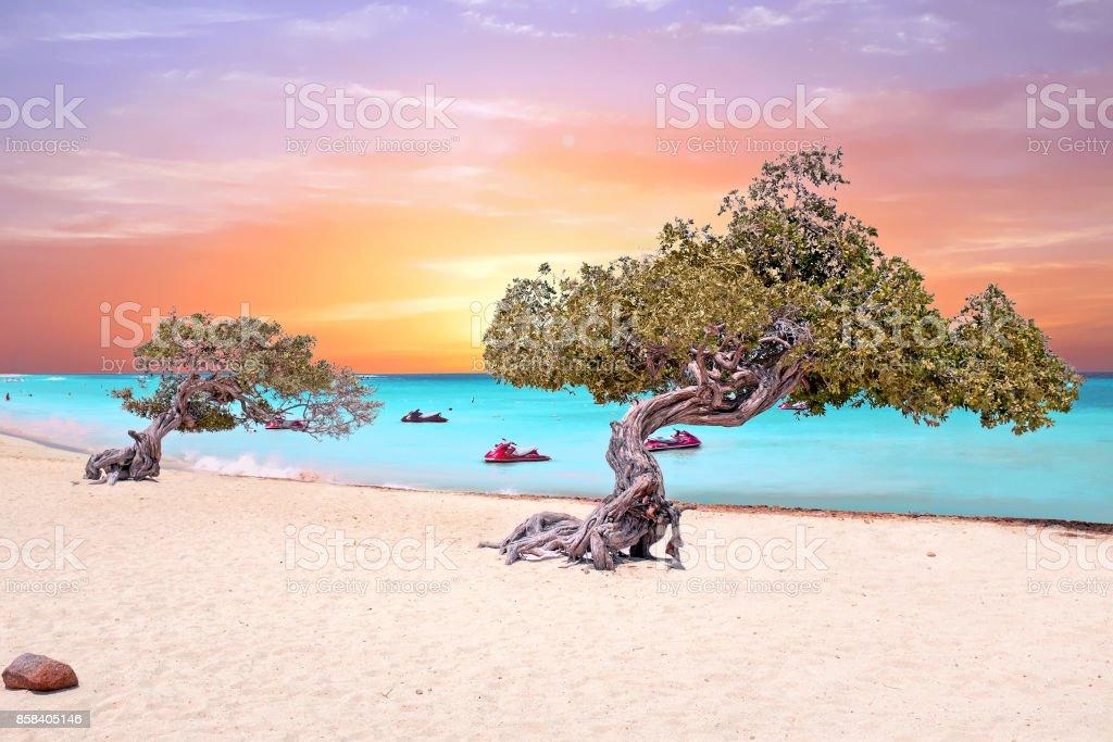 Eagle beach on Aruba island in the Caribbean Sea at sunset stock photo
