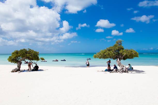 Eagle beach with divi divi trees on Aruba island stock photo