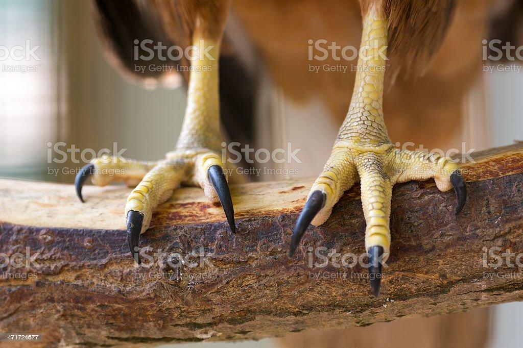 Eagle claws stock photo