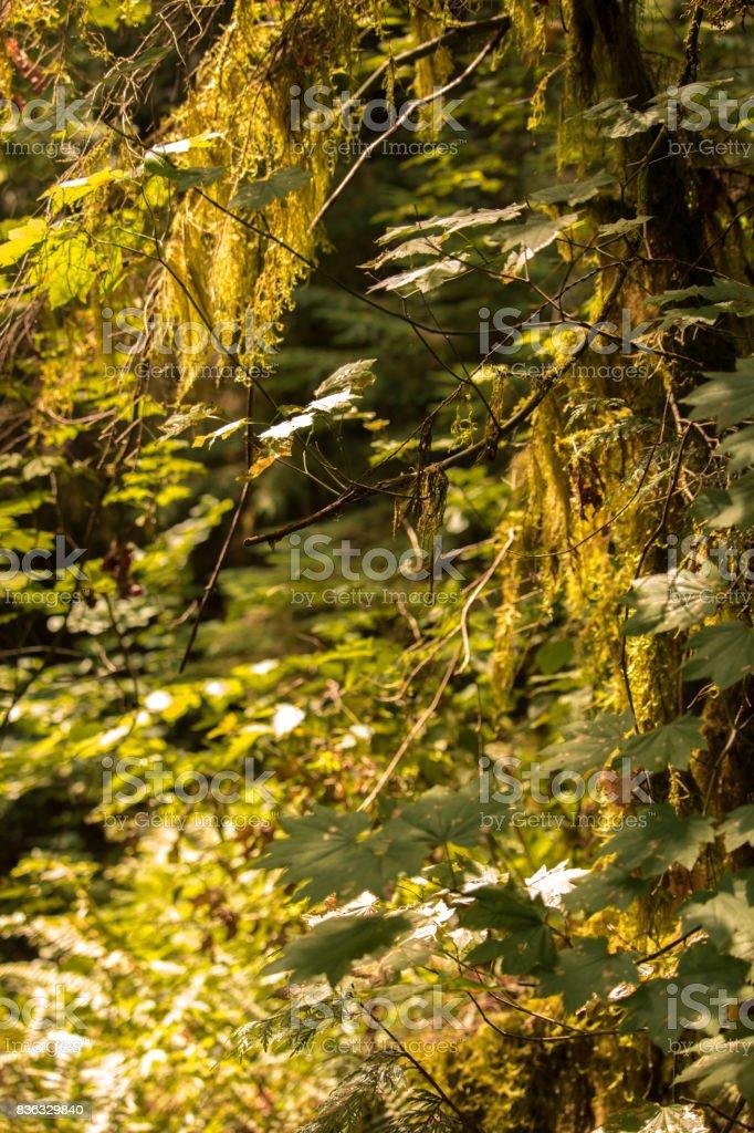 Eagle Creek Oregon stock photo