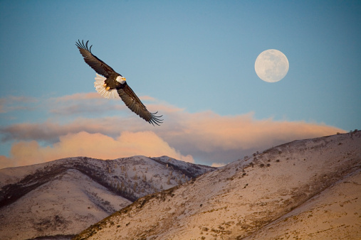 Eagle Flying in Front of the Mountain and Moon.